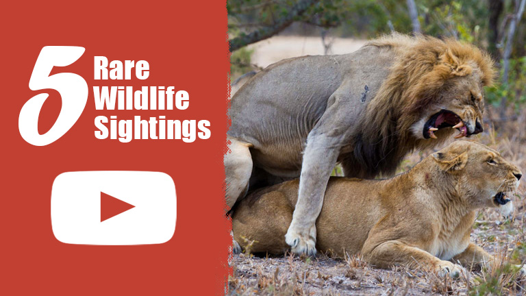 VIDEO: 5 Rare Wildlife Sightings You Have to See to Believe