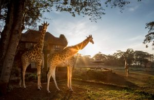 5 unique and wonderful experiences in Africa