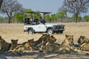 A guide to safari guides