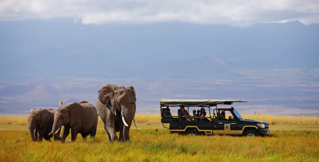 Best Christmas Destinations in Africa: Festive Season on Safari