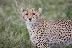 Why a Tanzania Safari is Perfect for a Family Holiday