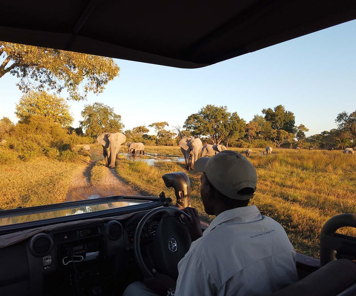 Kittys 2019 Botswana Trip Highlights