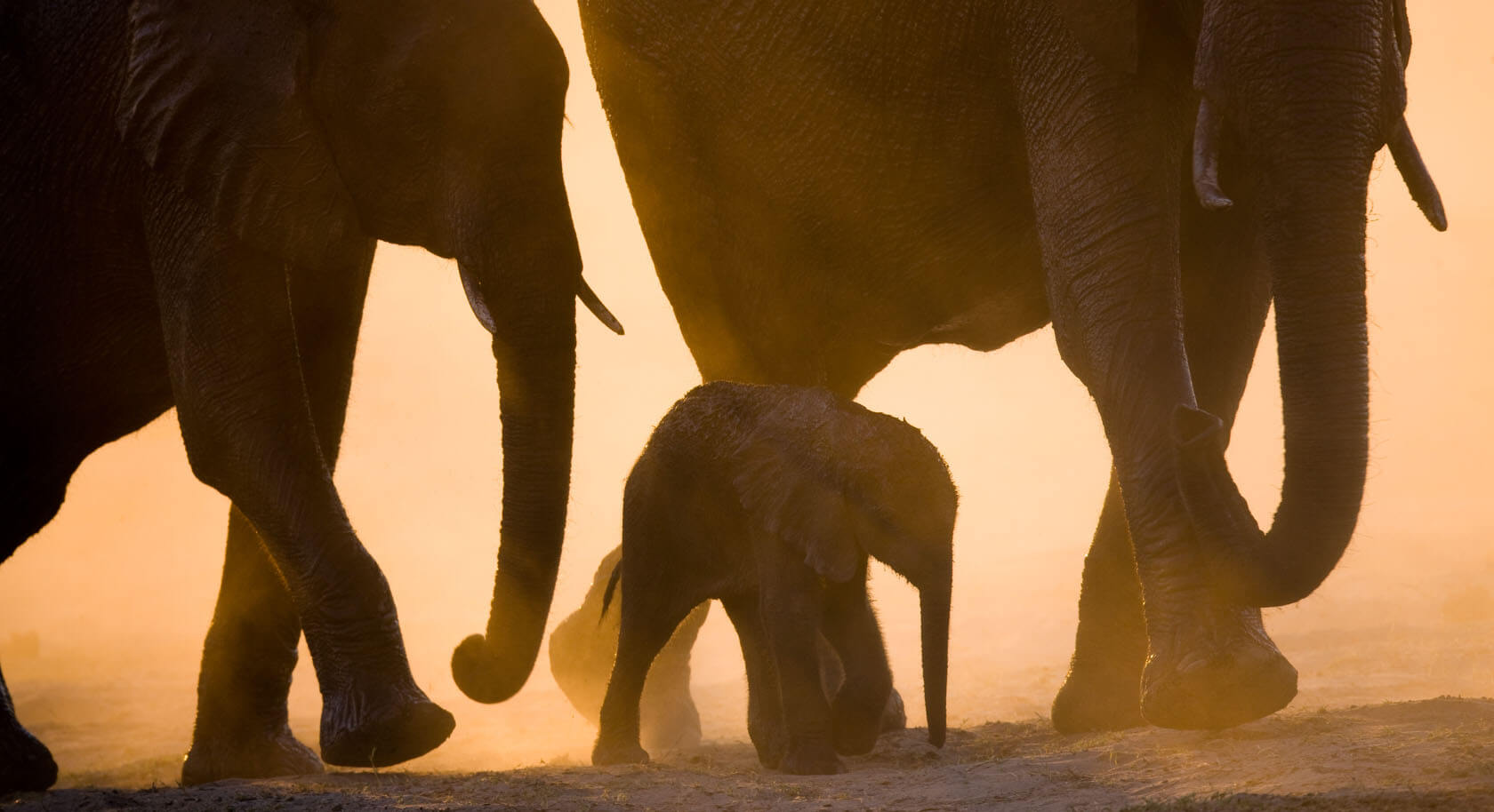 The benefits of an off peak East African Safari