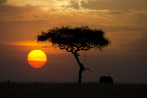 Tanzania Safari   the Perfect Family Holiday