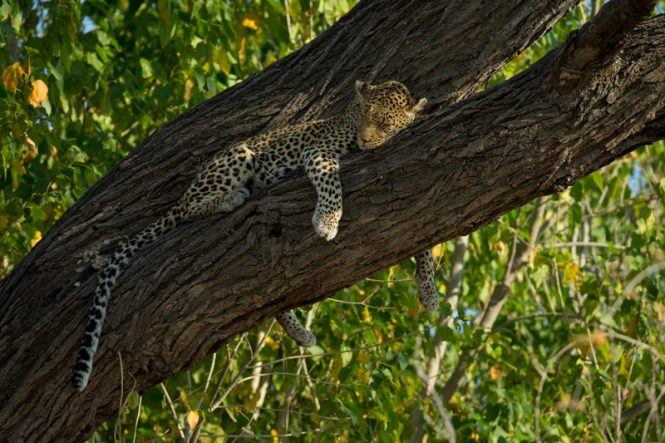 Safari Honeymoons in Southern Africa