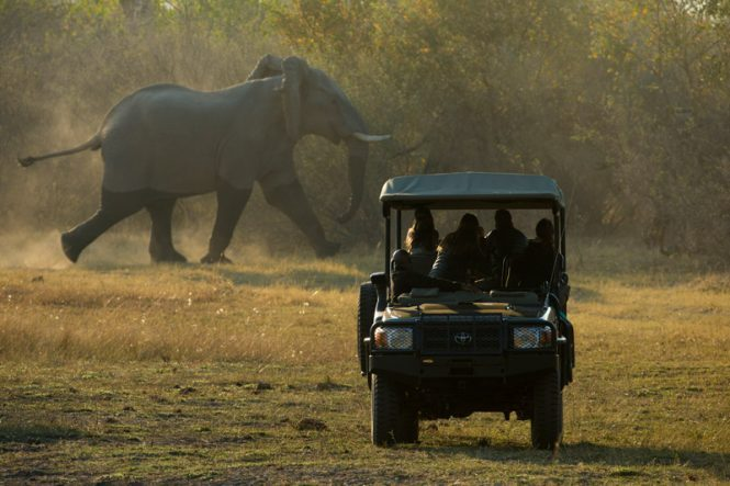 Southern Africa, Botswana, South Africa, Zimbabwe, safari honeymoons, safari honeymoon, luxury safari, Southern African honeymoon, African honeymoon