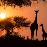 A guide to night game-drives on an African safari
