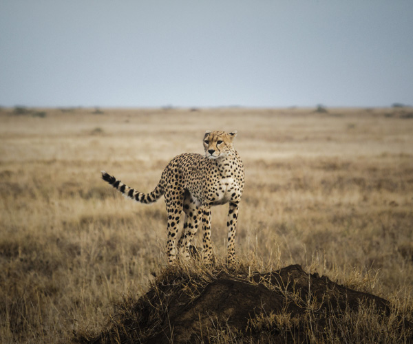 Where to see your Favourite African Animals