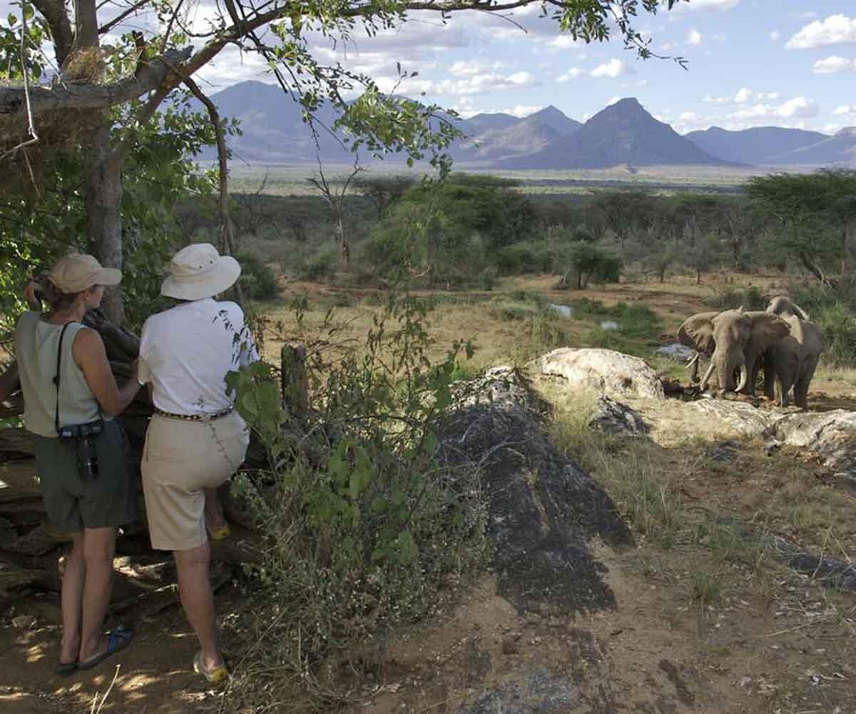 Sarara elephant hide