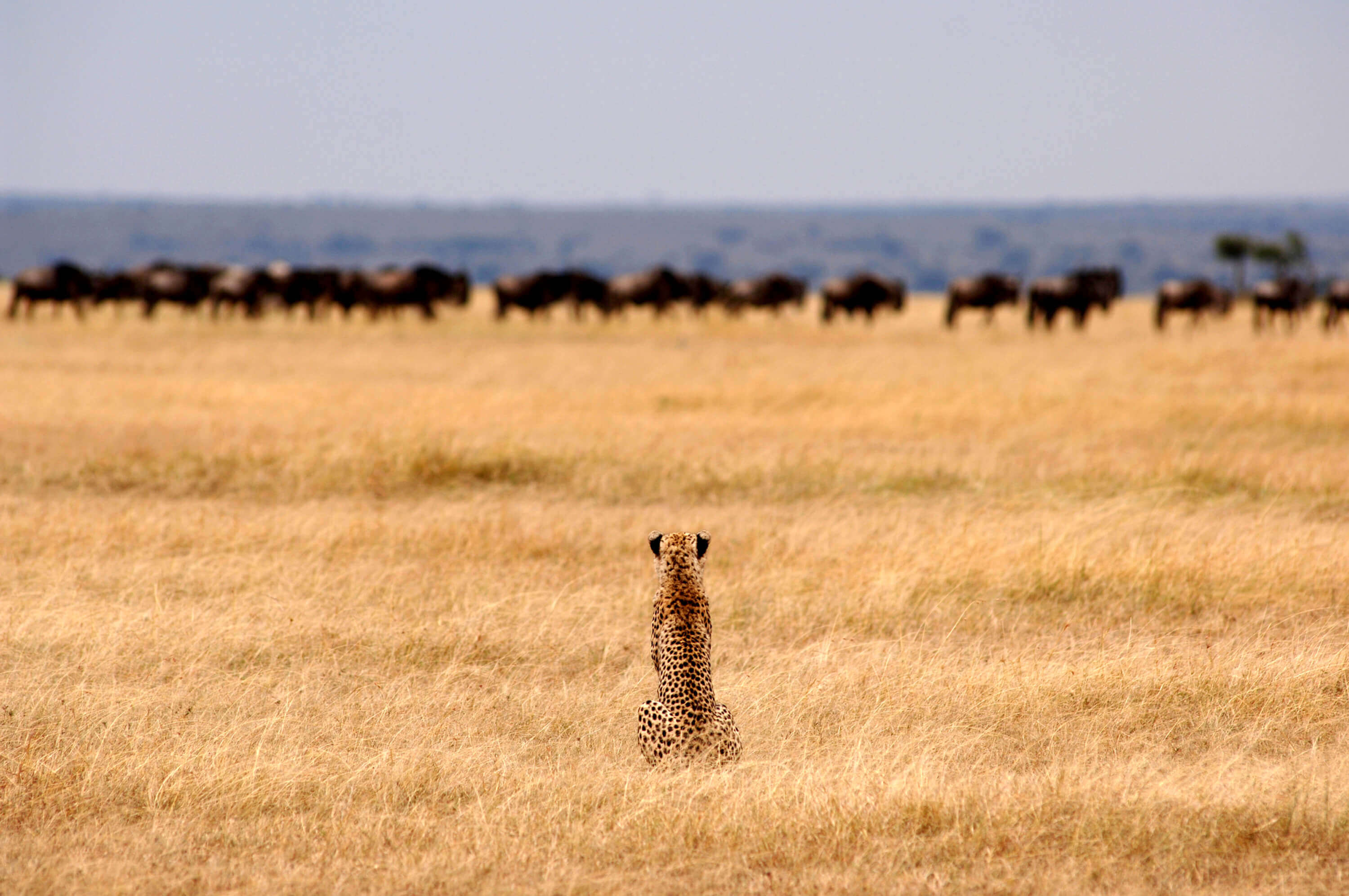 69f527d53f5 Where to see Our Planet s wildlife with Africa Odyssey