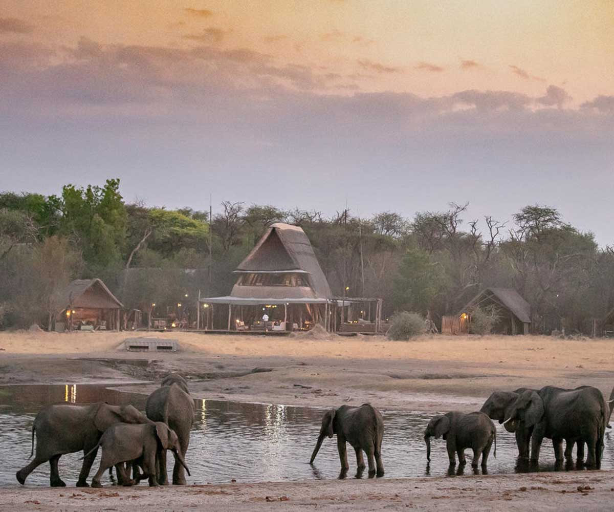 The Hide with Elephants