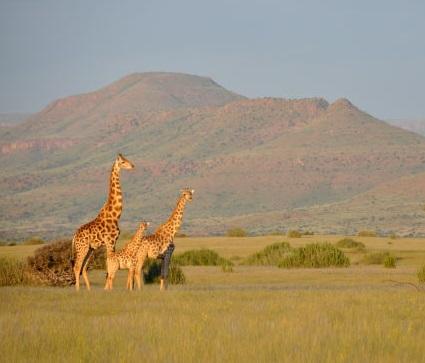 Full Of Surprises On Safari