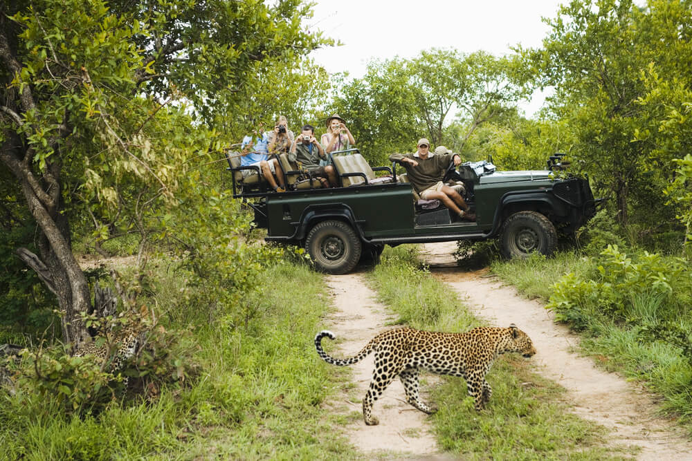 The Kruger VS Sabi Sands: Everything you need to know