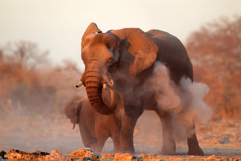 Tips for Spotting Wildlife on a Self Drive Safari