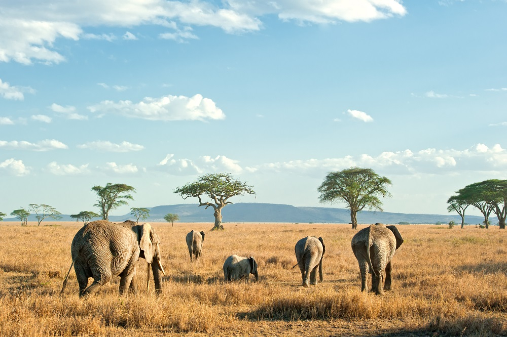 African Safari: The Trip to Take in Your 30s