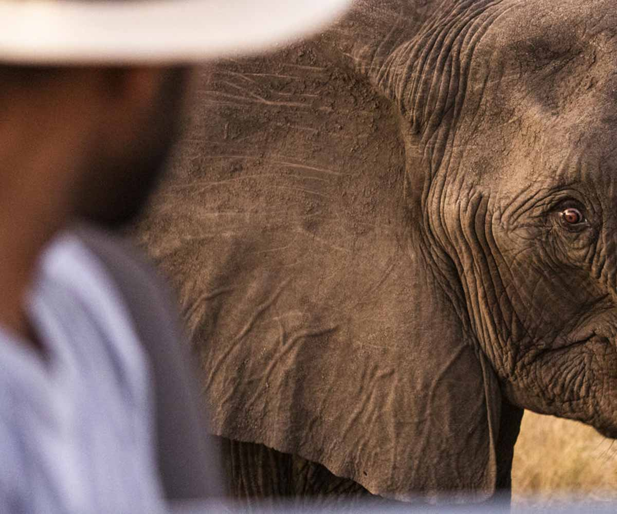 Best Places to See Elephants on Safari