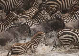 Tanzania Holidays and Safaris
